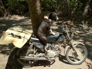 Surf Dog on motorcycle